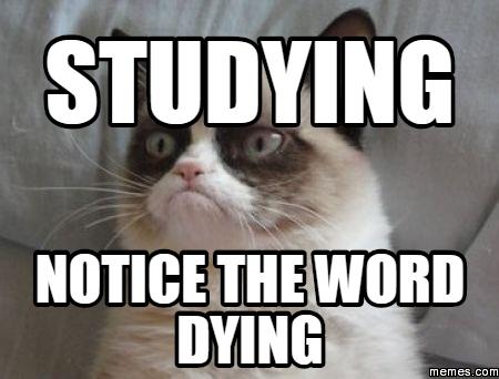 study-meme